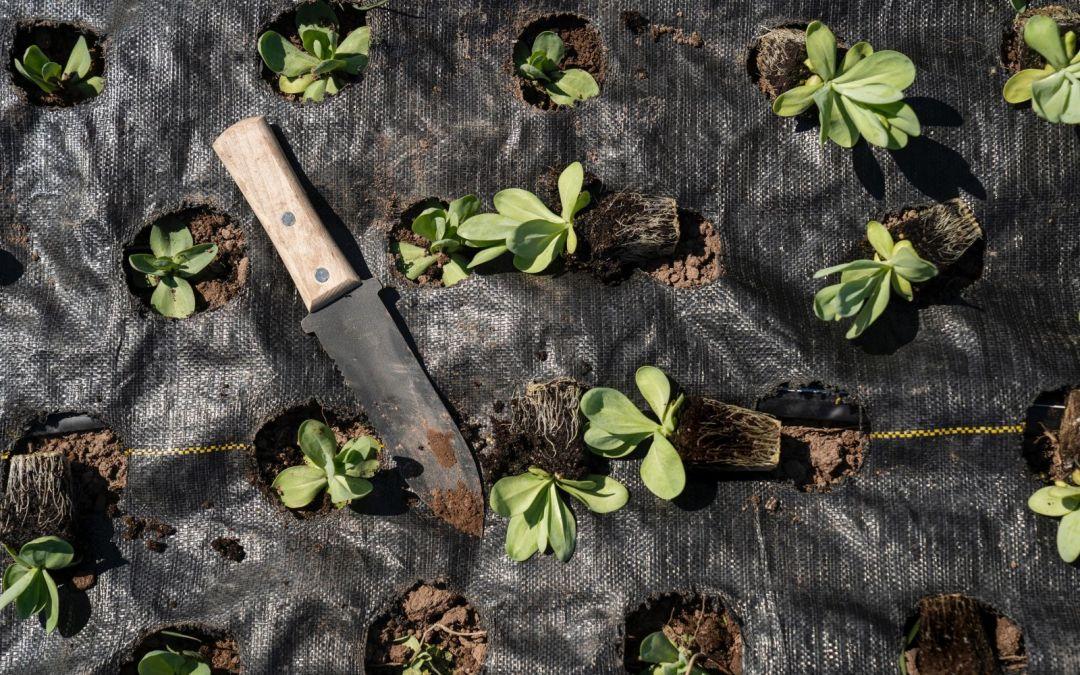 Top Tips: Gardener's Secrets